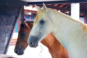 Cavalos no Pantanal_Foto de Nicoli Dichoff
