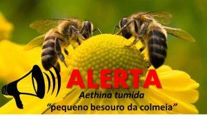 alerta bee